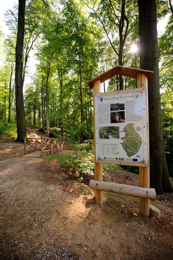 Zrewitalizowane ścieżki spacerowo-biegowe w Lesie Bukowym (2).jpeg