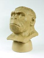 Homo erectus.jpeg