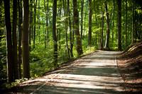 Las Bukowy (21).jpeg