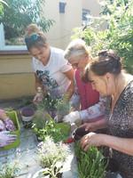 Galeria Senior wigor - sadzenie kwiatów