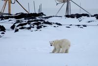 """Jak mówi Sabina: """"Niedźwiedź towarzyszył im na co dzień, spędzając czas w bliskim sąsiedztwie stacji""""."""